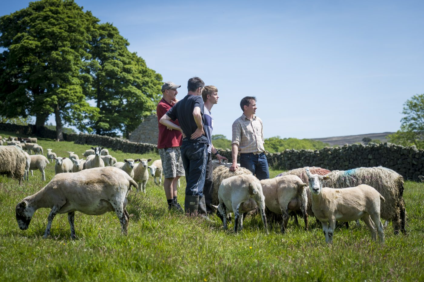 Robin Asquith and team in field with sheep